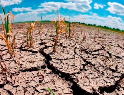 Plan municipal para luchar contra el cambio climático