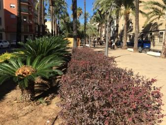 jardins ajutnament d'algemesí
