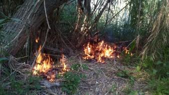 Incendi bosc ribera la veu d'algemesi