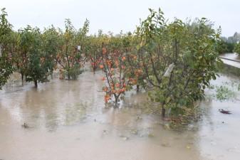 campo caqui anegado-coclogenesis-lluvias