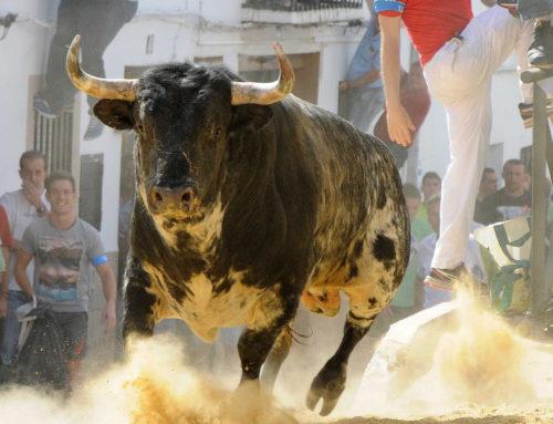 Mireia Mollà excluye de las ayudas a las ganaderías de bravo