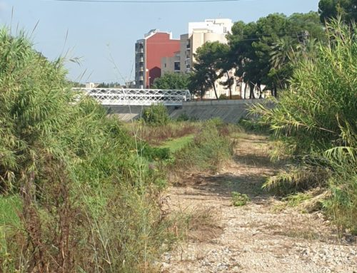 Algemesí retira 3,2 tones de fem del llit del riu Magre