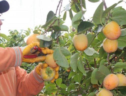 PP: Los agricultores de La Ribera sin reducción del IRPF